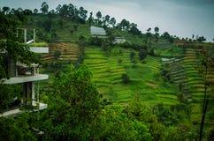 De aanplantingen van de thee in de voorstad van Bandung. Indonesië Stock Afbeelding
