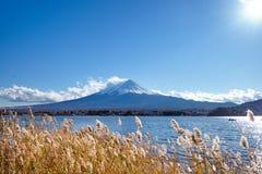 Mooie meningsmt Fuji met sneeuw, blauwe hemel en gouden mesdowgras in de wind bij Kawaguchiko-meer, Japan wordt afgedekt dat stock foto's