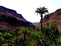 Mooie meningspalmen en bergvalleien in de zomer, Canarische Eilanden, Spanje stock fotografie