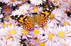 Mooie monarchvlinder Royalty-vrije Stock Afbeelding