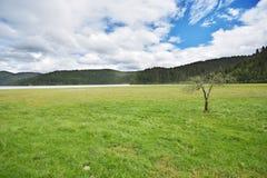 Mooie mountainï ¼ Œlakeï ¼ Œgrassland met eenzame boom Royalty-vrije Stock Afbeelding
