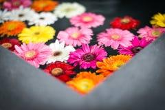 Mooie multicolored bloemen in water. Royalty-vrije Stock Foto's