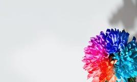 Mooie multicolored bloemenachtergrond stock fotografie