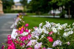 Mooie multicolored steeg van bloemen stock foto's