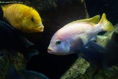 Mooie multicolored vissen op de bodem van het overzees Tropische mariene fauna royalty-vrije stock foto's