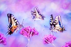 Mooie multicolored vlinders op roze bloemen Natuurlijk de zomer artistiek beeld stock foto's
