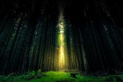 Mooie mystieke bos en zonnestraal - Fantasiehout stock foto