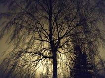 <b>Mooie nacht</b> royalty-vrije stock afbeeldingen