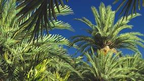 Mooie natuurlijke achtergrond - het Afrikaanse oase 3d teruggeven Stock Afbeeldingen
