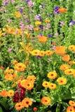 Mooie natuurlijke achtergrond met heldere gele bloemen Stock Fotografie