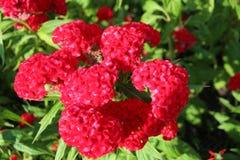 Mooie natuurlijke bloemen Stock Afbeeldingen