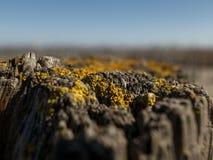 Mooie natuurlijke droge stomp met mos tegen de hemel Houten achtergrond royalty-vrije stock fotografie