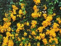 Mooie natuurlijke muur Groene bladeren en Gele bloemenachtergrond Royalty-vrije Stock Foto's