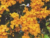 Mooie natuurlijke muur Groene bladeren en Gele bloemenachtergrond Royalty-vrije Stock Afbeelding