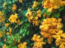 Mooie natuurlijke muur Groene bladeren en gele bloemenachtergrond, Royalty-vrije Stock Afbeeldingen