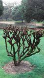 Mooie natuurlijke tuin een boom stock afbeeldingen
