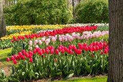 Mooie Nederlandse bloemen Royalty-vrije Stock Fotografie