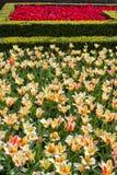 Mooie Nederlandse bloemen Stock Afbeeldingen