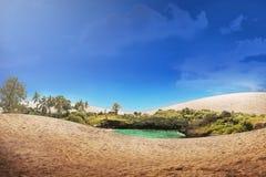 Mooie oase in de woestijn royalty-vrije stock foto