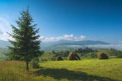 Mooie ochtend met hooibergen op een weide Royalty-vrije Stock Foto's