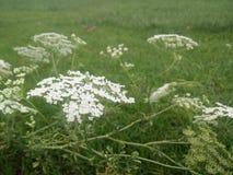 Mooie Ochtend Natuurlijke Bloemen Sri Lanka royalty-vrije stock fotografie