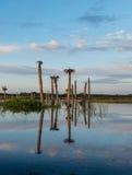 Mooie ochtend in Viera Wetlands stock afbeeldingen