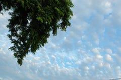 Mooie ochtenden met lichte wolken en bomen royalty-vrije stock afbeelding