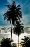 Mooie ochtenden met lichte wolken en kokospalmen stock fotografie
