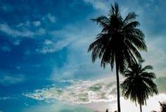 Mooie ochtenden met lichte wolken en kokospalmen stock afbeeldingen