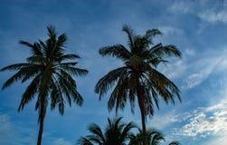 Mooie ochtenden met lichte wolken en kokospalmen royalty-vrije stock foto's