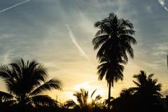 Mooie ochtenden met lichte wolken en kokospalmen stock afbeelding