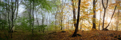 Mooie ochtendscène in het bos, Verandering van twee seizoenen Stock Afbeelding