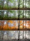 Mooie ochtendscène in het bos, Verandering van vier seizoenen stock afbeeldingen