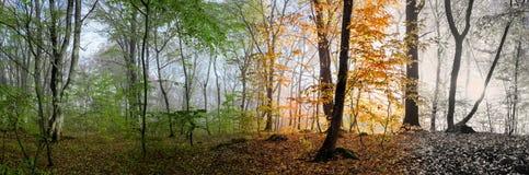 Mooie ochtendscène in het bos, Verandering van vier seizoenen Stock Foto's
