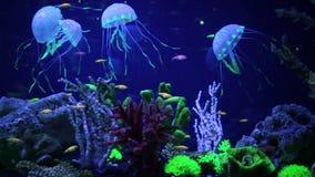 Mooie onderwaterwereld met tropische vissen stock footage
