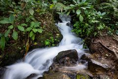 Mooie onscherpe vlotte stroom in het midden van het hout van Gede Pangrango Mountain stock afbeeldingen