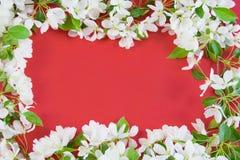 Mooie ontwerperachtergrond Stock Foto's