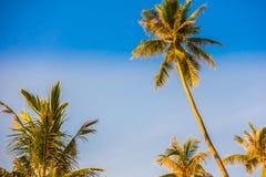 Mooie openluchthemel met kokosnotenpalm Stock Foto's