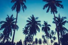 Mooie openluchtmening met tropische kokosnotenpalm op sk Stock Afbeelding
