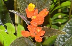 Mooie oranje bloem Royalty-vrije Stock Afbeeldingen