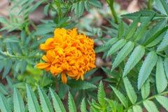 Mooie oranje bloem stock foto