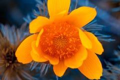 Mooie oranje bloem Flowerbackground, gardenflowers Nam op de bokehachtergrond toe Horizontale abstracte achtergrond Royalty-vrije Stock Foto