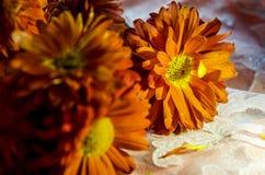 Mooie oranje bloemen die in de zon fonkelen stock foto