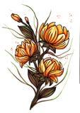 Mooie oranje die leliebloemen op witte achtergrond worden ge?soleerd royalty-vrije illustratie