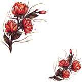 Mooie oranje die leliebloemen op witte achtergrond worden ge?soleerd stock illustratie