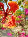 Mooie oranje en geelachtige bloem stock afbeelding