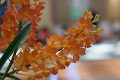 Mooie oranje orchidee Royalty-vrije Stock Afbeeldingen