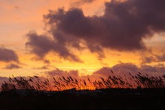 Mooie oranje zonsondergang in de wolken, met gras, spicasilhouet stock foto