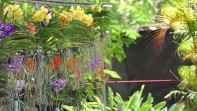 Mooie orchidee in de tuin stock videobeelden