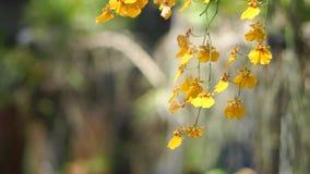 Mooie orchidee in de tuin stock footage